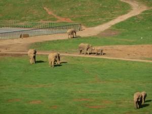 Was wohl - Elefanten natürlich